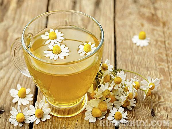 Cách ngâm rượu hoa cúc khô